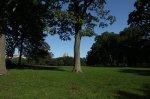 Central Park on a sunny day