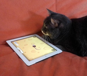 Byte e games for cats